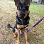 Testimonial 2 dog
