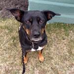 Testimonial 3 dog